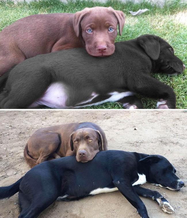antes-e-depois-cachorros-5