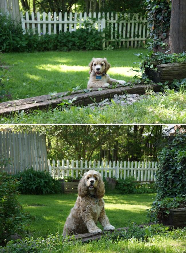antes-e-depois-cachorros-9