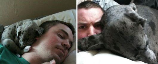 antes-e-depois-cachorros-x
