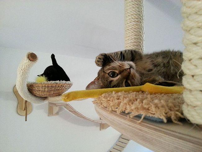 móveis-para-gatos-20-2