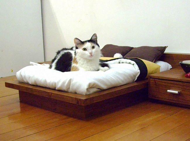móveis-para-gatos-3-2
