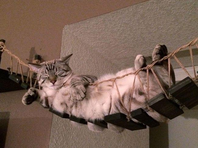 móveis-para-gatos-4-2