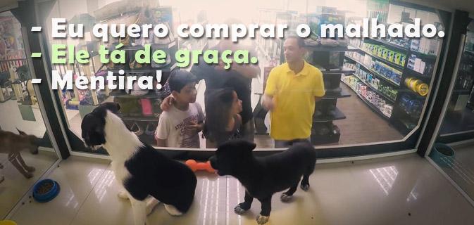 Secretamente, ONG troca animais à venda em pet shops por outros para adoção