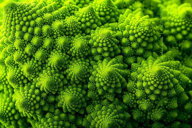 plantas-geométricas-1