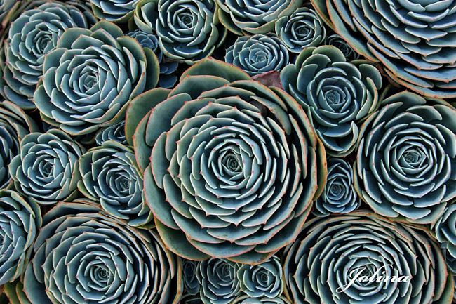 plantas-geométricas-17