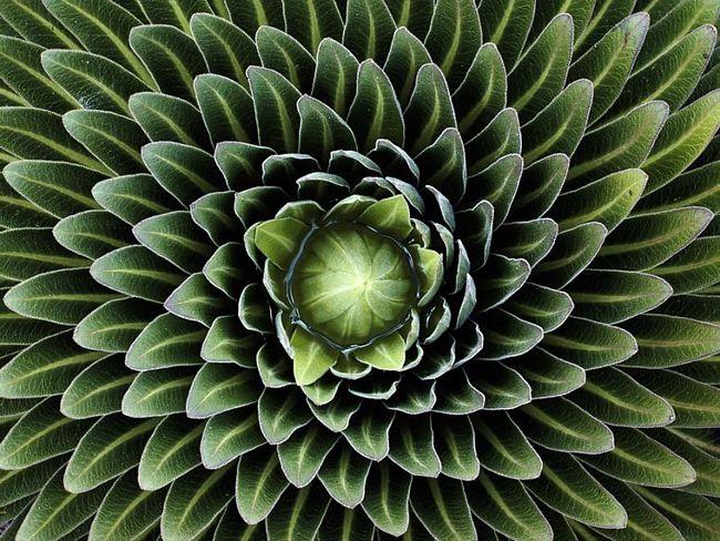 plantas-geométricas-19