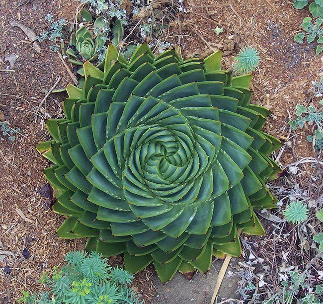plantas-geométricas-2