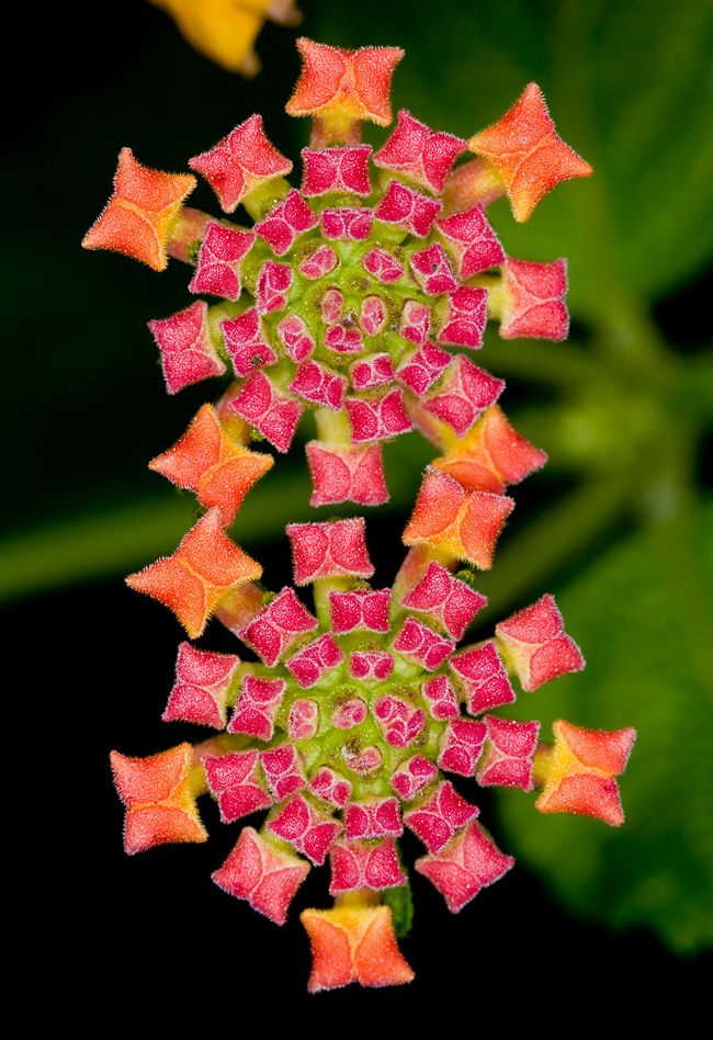 plantas-geométricas-6