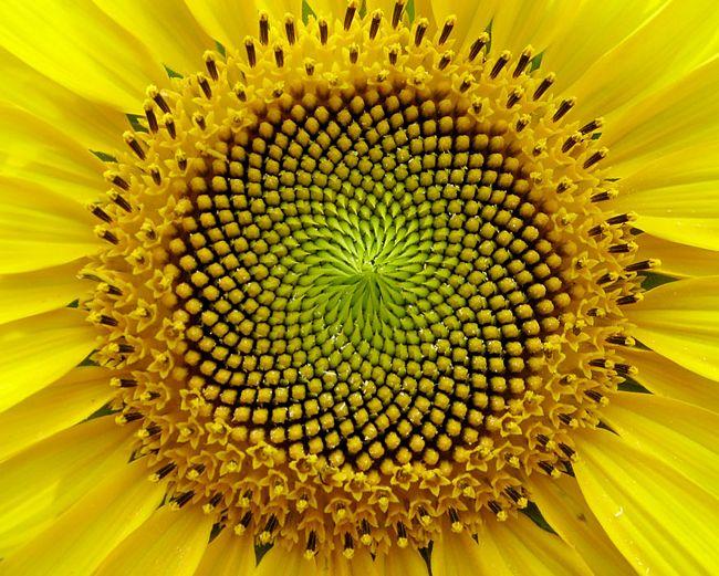 plantas-geométricas-9