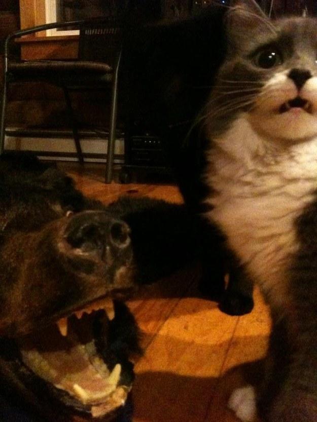 reações-de-gatos-14