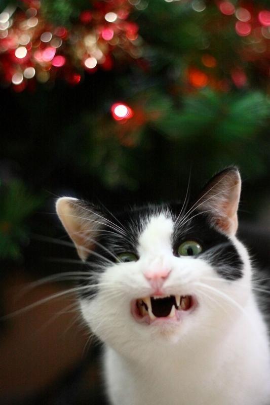reações-de-gatos-20