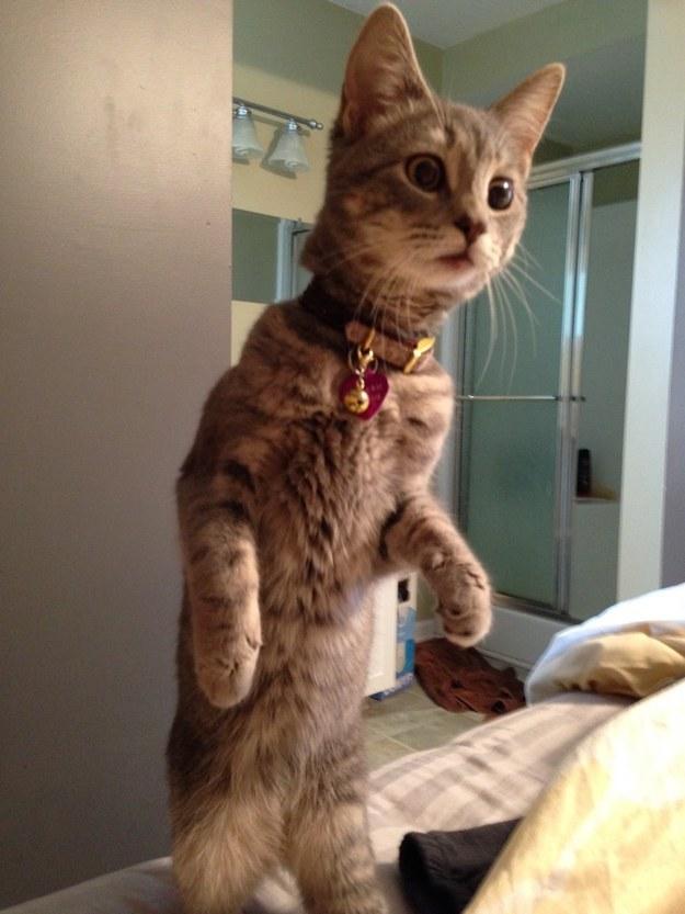 reações-de-gatos-9