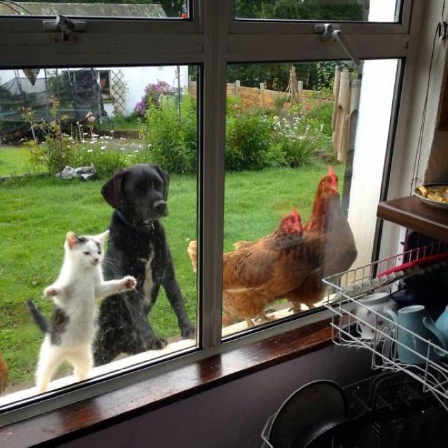 animais-querem-entrar-agora-1
