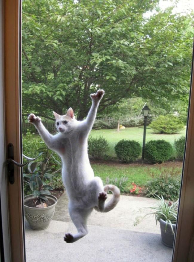 animais-querem-entrar-agora-12