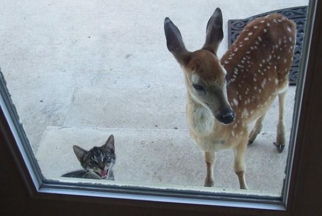 animais-querem-entrar-agora-13