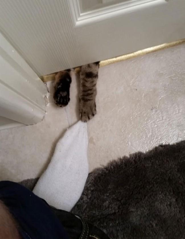 animais-querem-entrar-agora-18