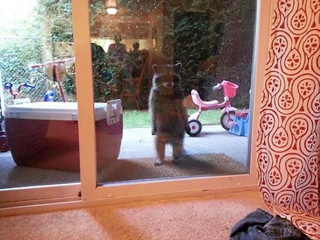 animais-querem-entrar-agora-2