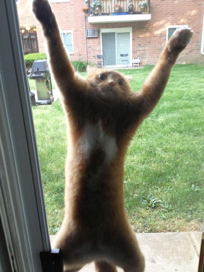 animais-querem-entrar-agora-3