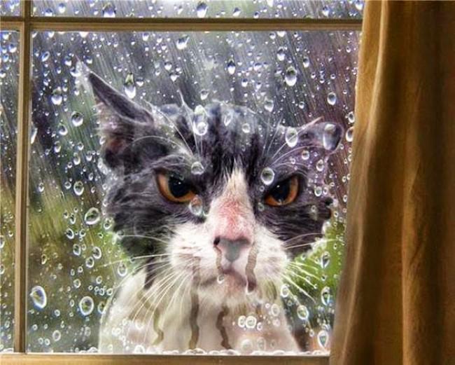 animais-querem-entrar-agora-5