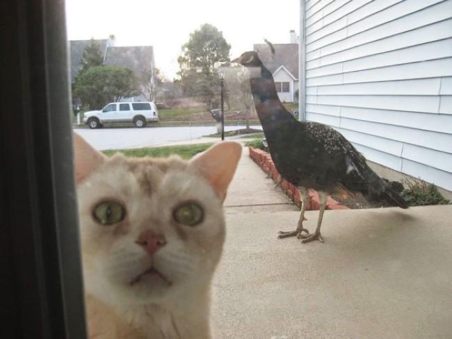 animais-querem-entrar-agora-6