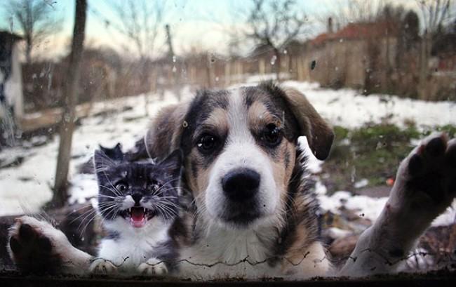 animais-querem-entrar-agora-8