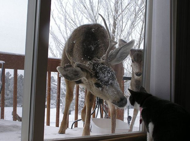 animais-querem-entrar-agora-9