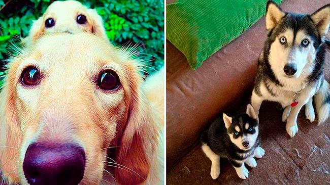 cachorros-mini