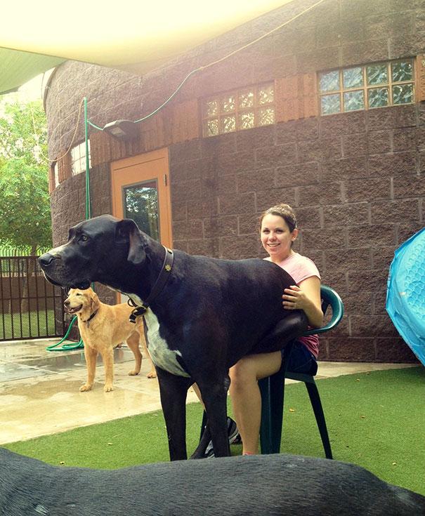cachorros-muito-grandes-11