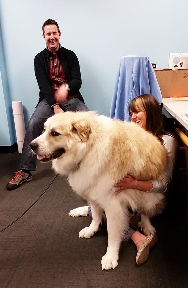 cachorros-muito-grandes-19