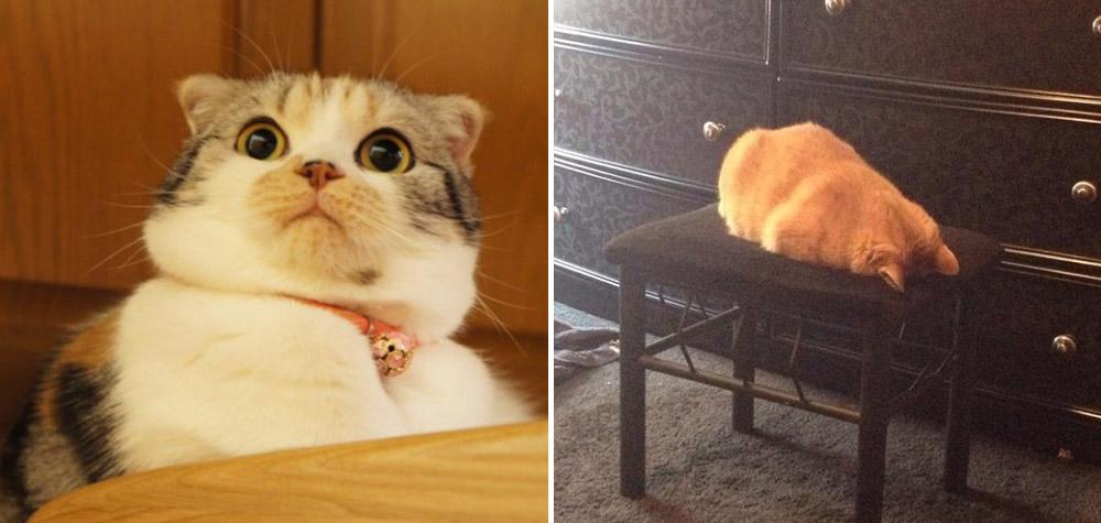reacao-gatos