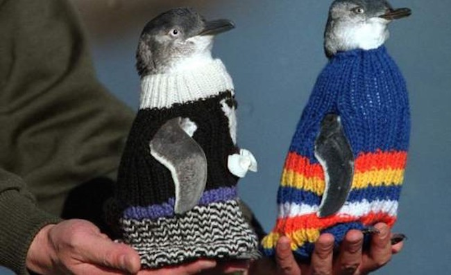 sueter_pinguins4