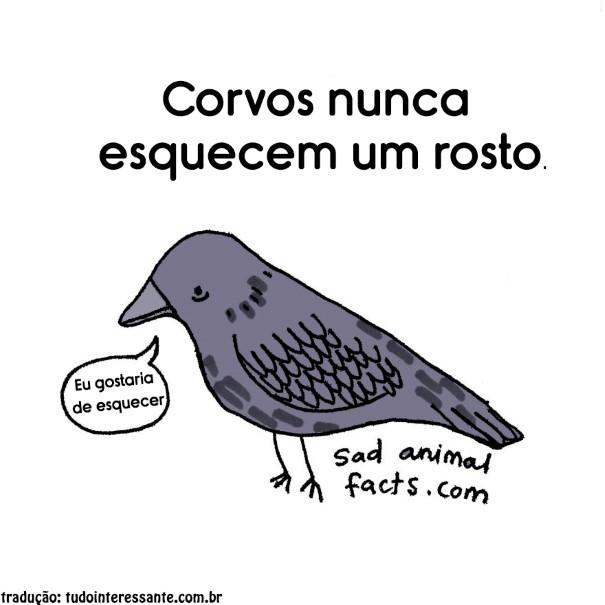 fatos-tristes-sobre-animais-3