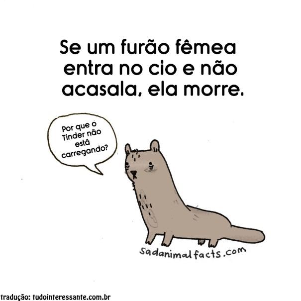 fatos-tristes-sobre-animais-7