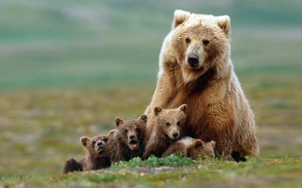 fotos_incriveis_animais11