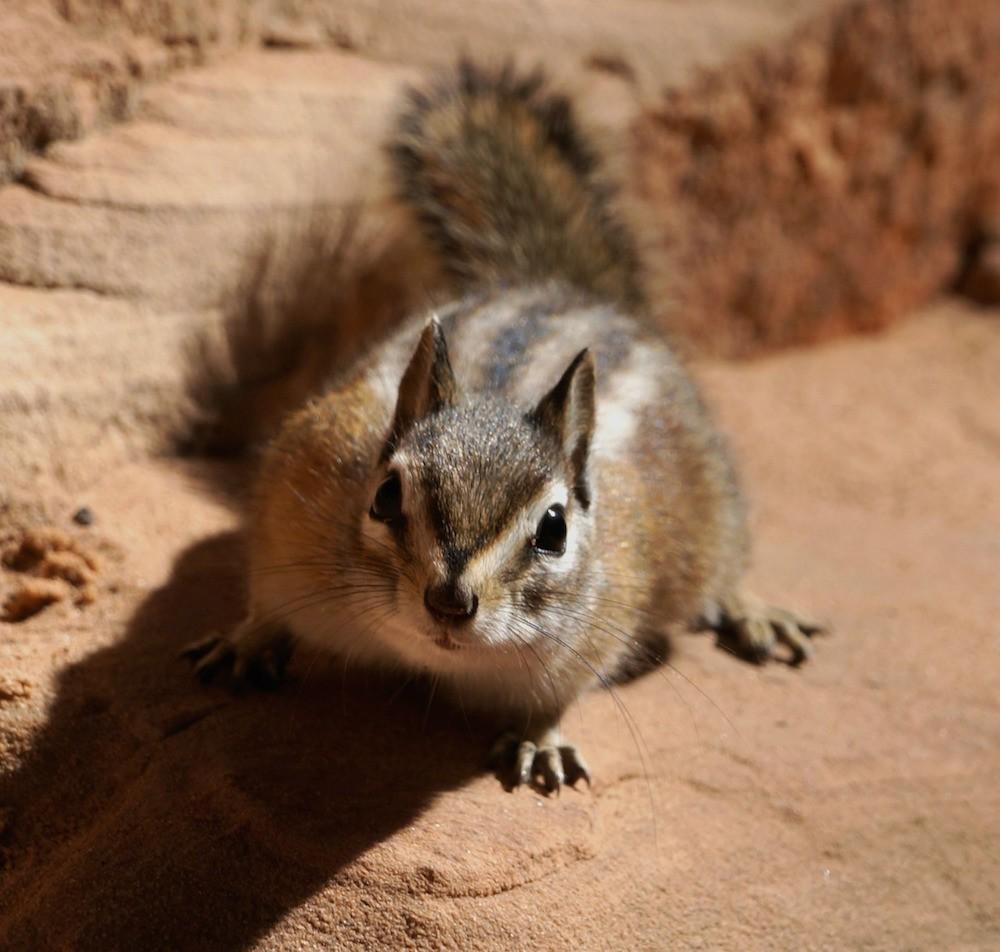 fotos_incriveis_animais14