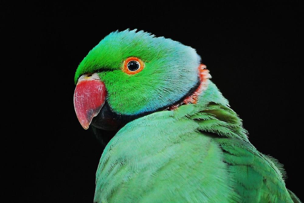 fotos_incriveis_animais18