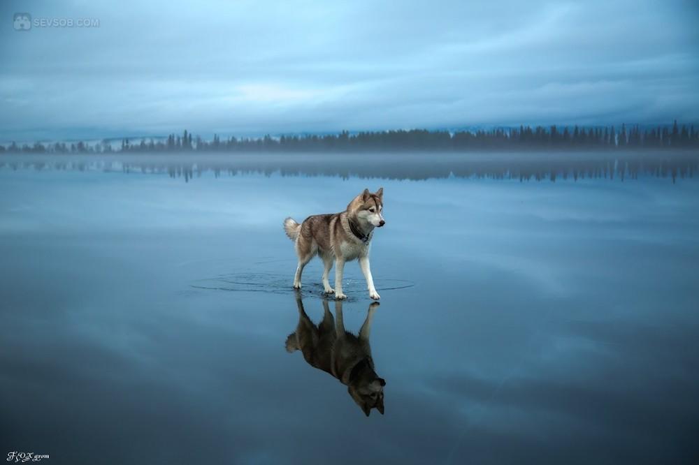 fotos_incriveis_animais2