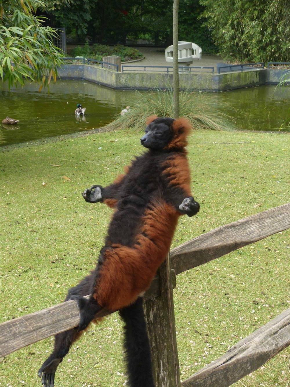 fotos_incriveis_animais4