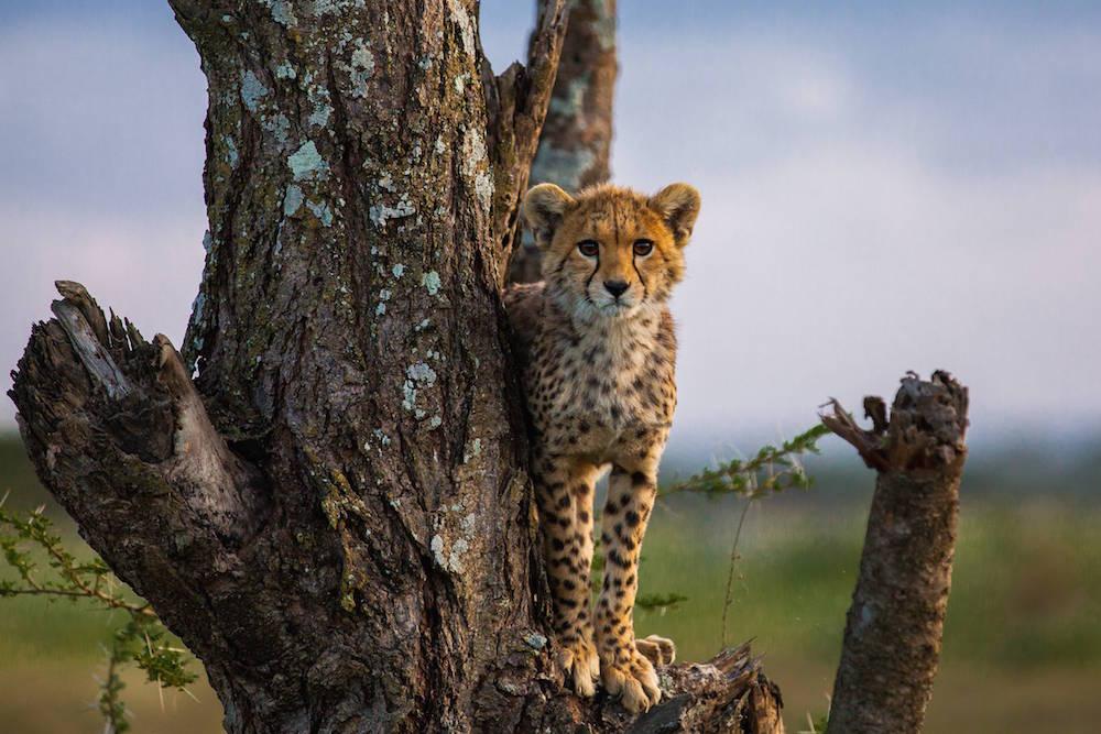 fotos_incriveis_animais5