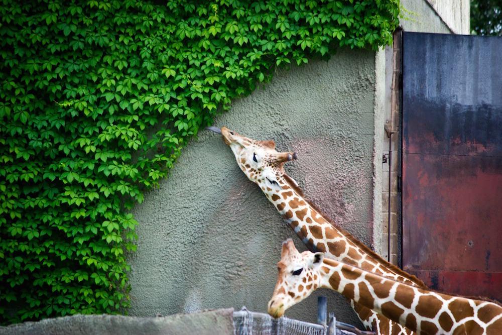 fotos_incriveis_animais7