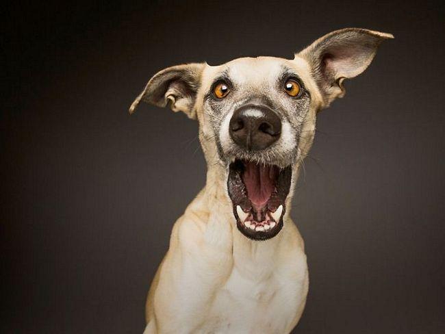 retratos-expressivos-de-cães-13