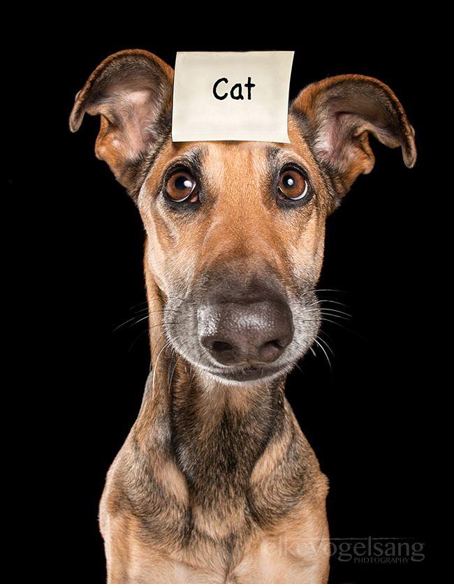 retratos-expressivos-de-cães-15