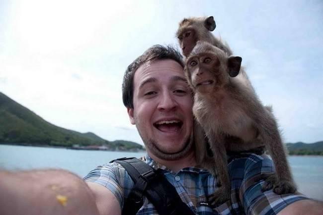 animais-que-não-querem-tirar-selfies-27