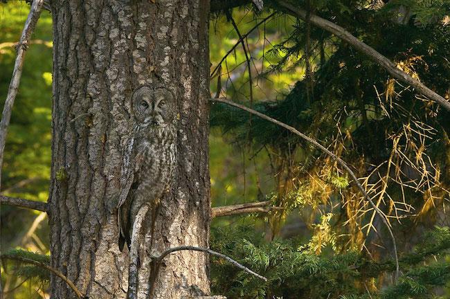 camuflagem_animal11