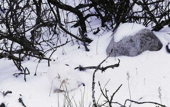 camuflagem_animal14
