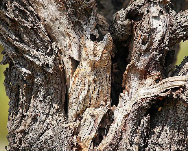camuflagem_animal15
