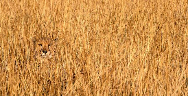 camuflagem_animal21