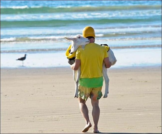 cenas-inusitadas-capturadas-na-praia-20