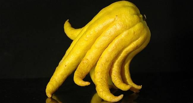 frutas-maravilhosas-que-devemos-experimentar-1