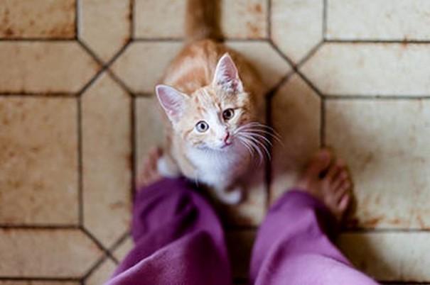 gatos-3